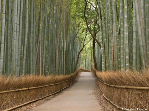 351-bamboo-in-Kyoto